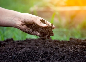 Как отмыть руки и ногти после работы в огороде на грядках?