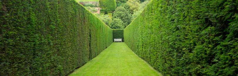 Как сделать живую изгородь на дачном участке: советы для новичков