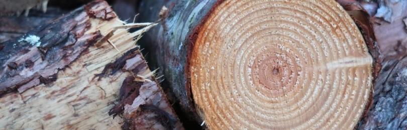 Чем покрыть дерево на улице: все виды защитных и декоративных составов