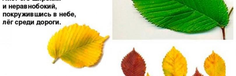 Поделки из осенних листьев с дошкольниками. птичка