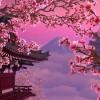 Можно ли вырастить  сакуру у себя в саду или около дома?