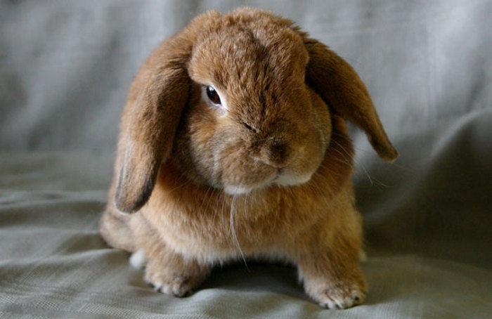 Топ-10 необычных питомцев: экзотические домашние животные для вашей квартиры