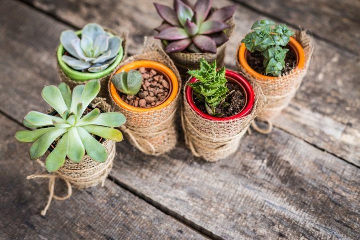 Как размножать суккуленты? как размножить растение черенками или листьями в домашних условиях. уход после разведения