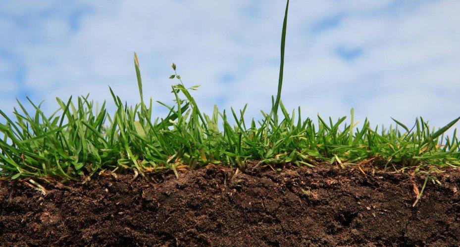 Определение качественных показателей почвы. как узнать какая почва на участке? фото — ботаничка.ru