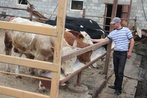 Выращивание бычков на мясо как бизнес в домашних условиях (какие затраты, бизнес-план) + видео