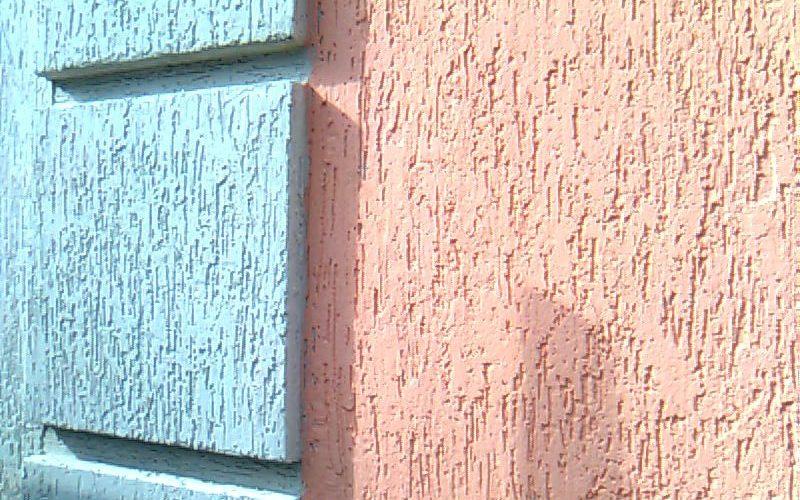 Жук короед: как избавиться в доме, как выглядит жук короед на фото