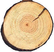 Древесина бука (11 фото): характеристики и свойства, цвет и текстура, применение и структура. как выглядит рисунок древесины и само дерево?