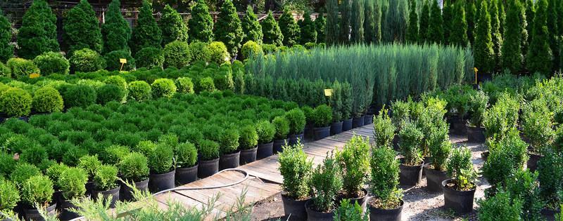 Красивые деревья для сада: фото, как подобрать, ухаживать, расположить  | o-builder.ru