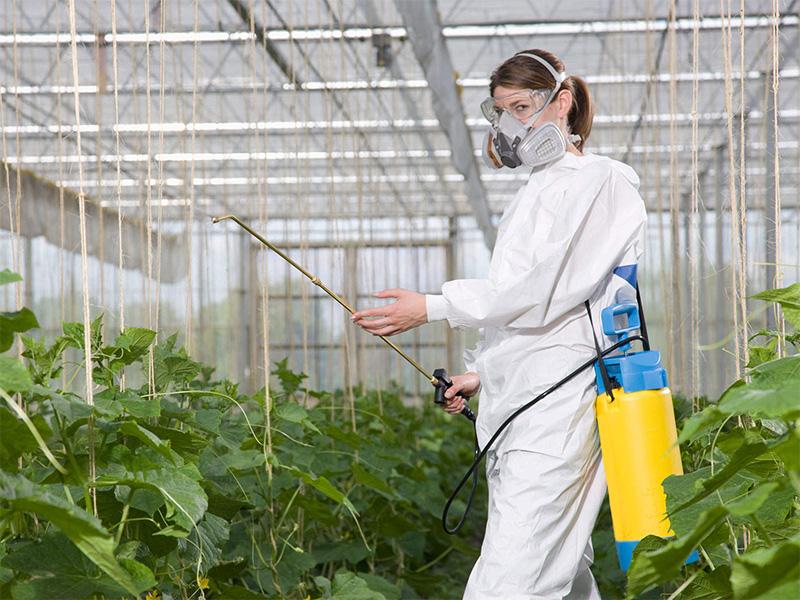 Органическое земледелие на даче: практика, с чего начать
