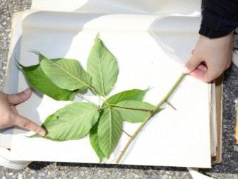 как сделать гербарий своими руками из листьев