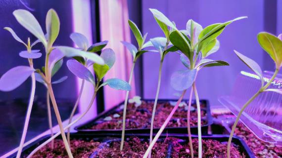 Плодовые деревья и кустарники на садовом участке: схема посадки, как правильно размещать растения в саду, фото