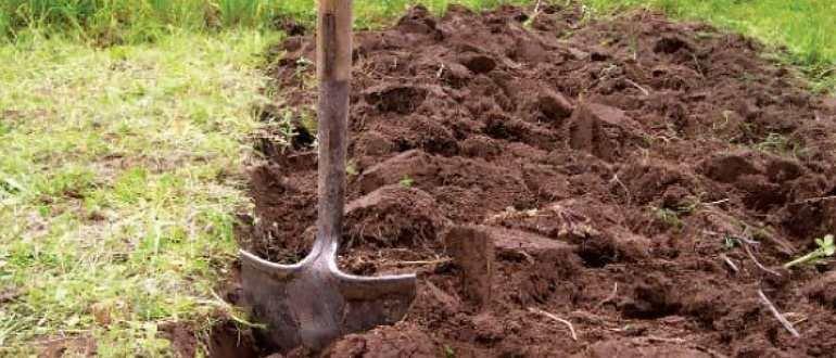 Опилки как удобрение: как применять на огороде и можно ли быстро сделать компост, лучшие способы производства перегноя с помощью мочевины и куриного навоза