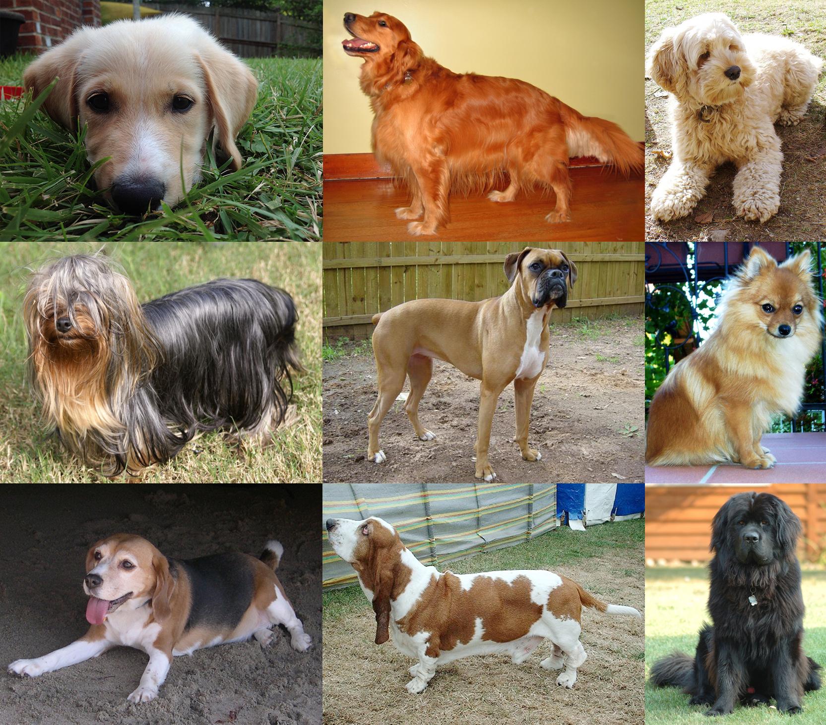 Лучшие питомники для собак воронежа в 2020 году, их особенности и недостатки.