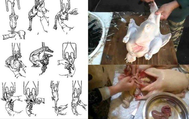 Три простых способа как правильно и быстро ощипать курицу своими руками