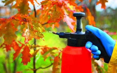 опрыскивание деревьев весной от вредителей и болезней