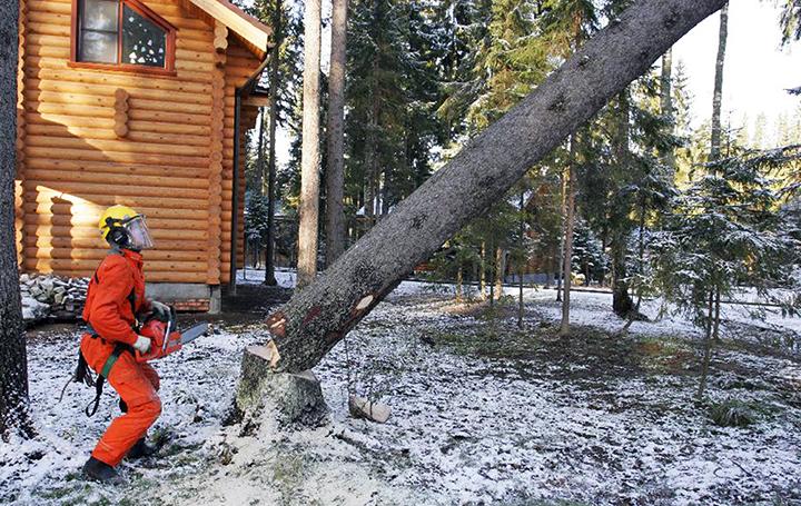 Кто должен спиливать сухие, аварийные, мешающие деревья, и на ком лежит ответственность за спил?