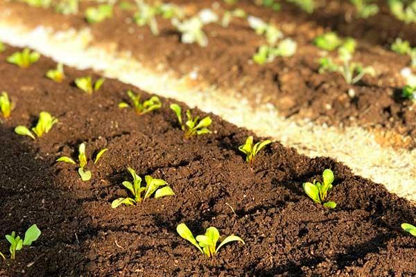 Как правильно сделать компост: 5 вариантов изготовления компоста на даче. радость для растений!