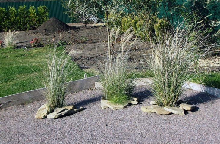 Лучшая декоративная трава - 145 фото и идеи по применению декоративных вариантов трав
