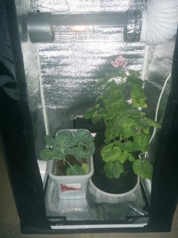 Гроубокс своими руками: поэтапная инструкция как сделать и обустроить гроубокс своими руками, правила выращивания растений (фото + видео)