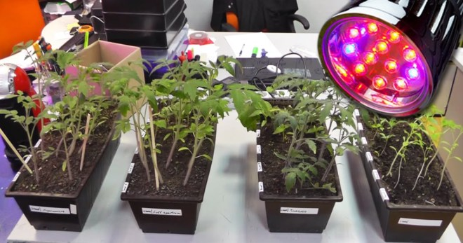 розовая лампа для растений