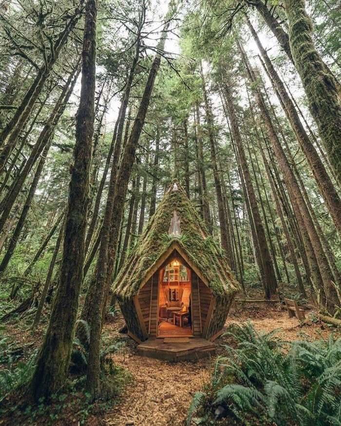 Как получить 100 кубов леса бесплатно?