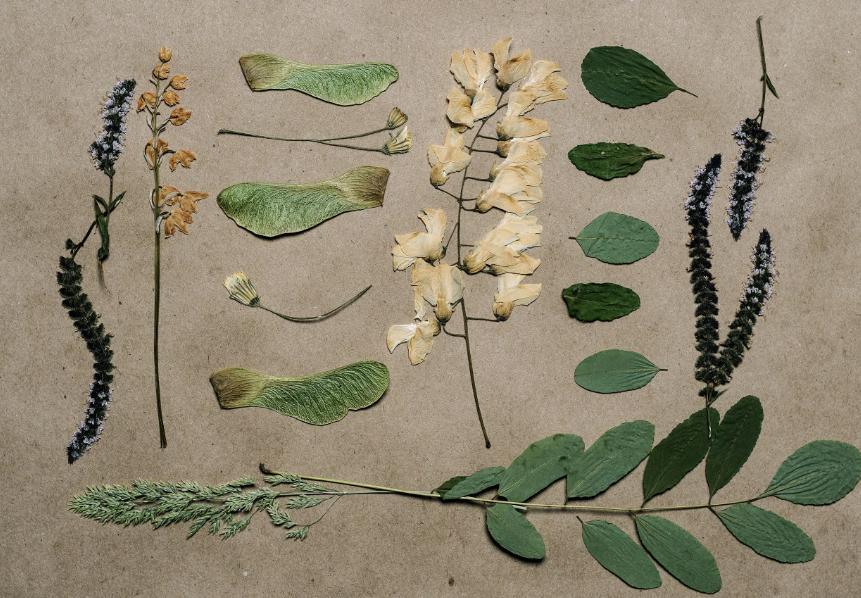 как делается гербарий