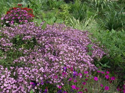 Почвопокровные многолетники: каталог стелющихся и ползучих растений, цветущих все лето