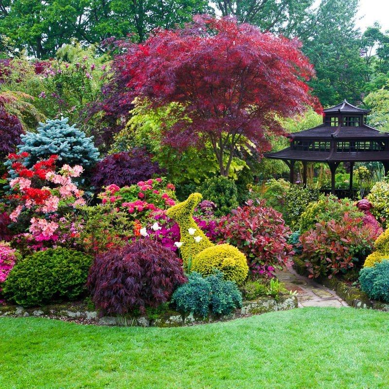 красивые деревья для сада