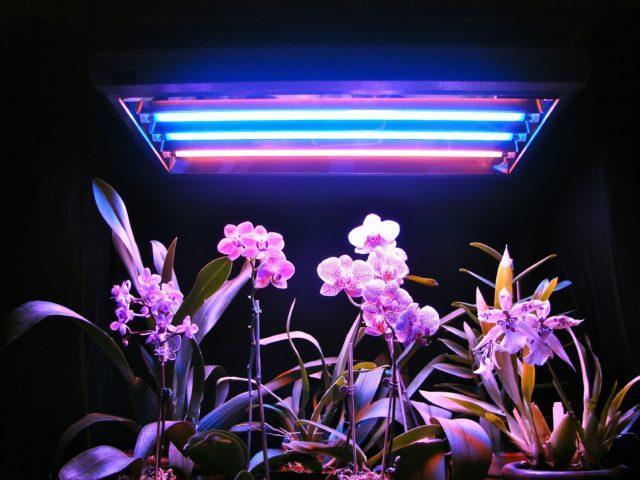 Лампы для растений- правила выбора, инструкции по установке