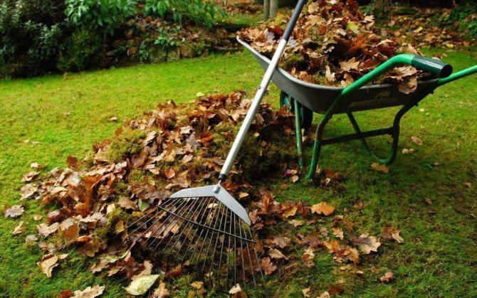 Нужно ли убирать скошенную траву с газона, или можно оставлять: надо ли очищать участок от состриженной растительности после триммера, польза и вред этой уборки