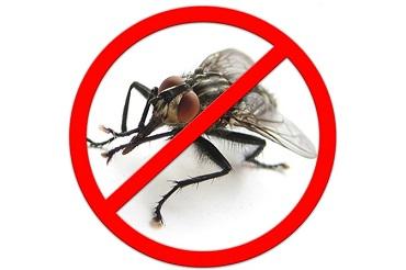 К чему снятся мухи: много, в доме, мухи во сне женщине.