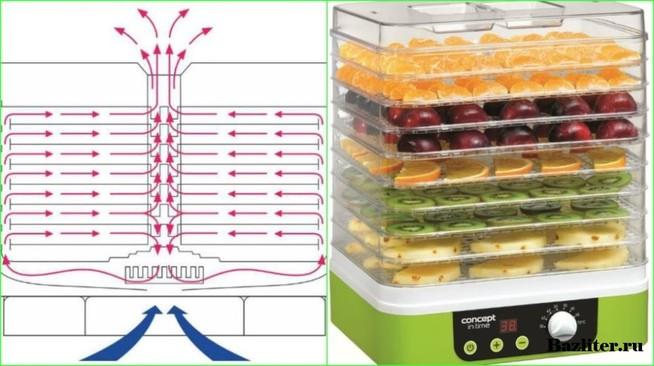 Лучшие сушилки для овощей и фруктов: виды, особенности, советы по эксплуатации