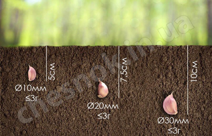 способы посадки чеснока осенью
