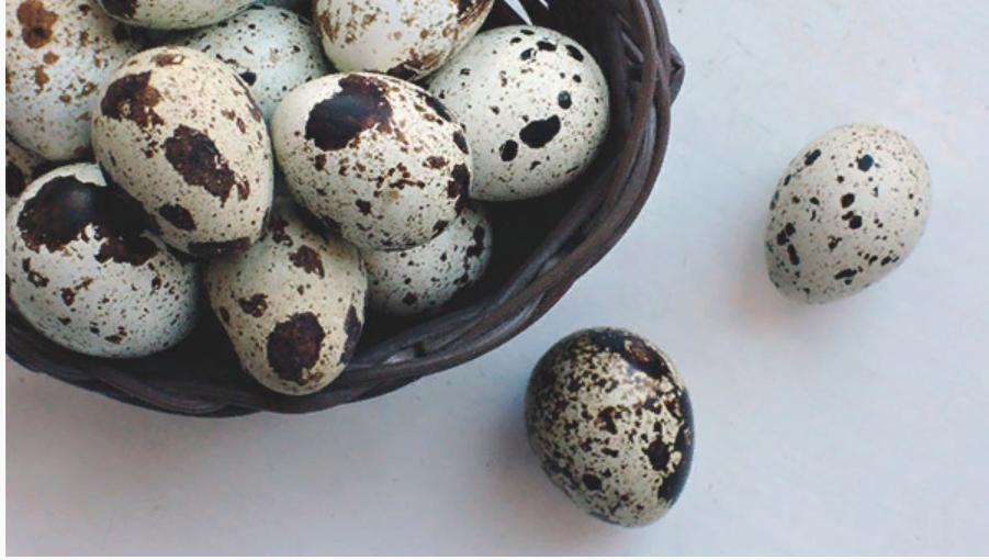 Перепелиные яйца: польза и вред для мужчин, женщин и детей