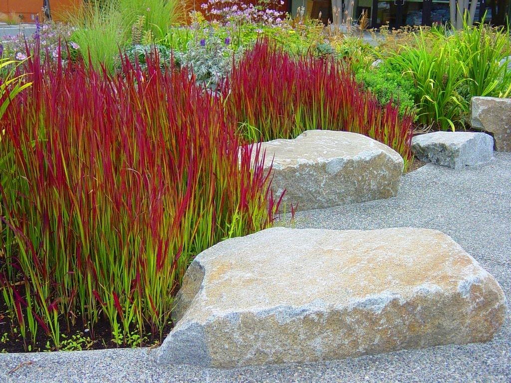 Декоративная трава - сорта травы и советы по подбору растений для украшения участка