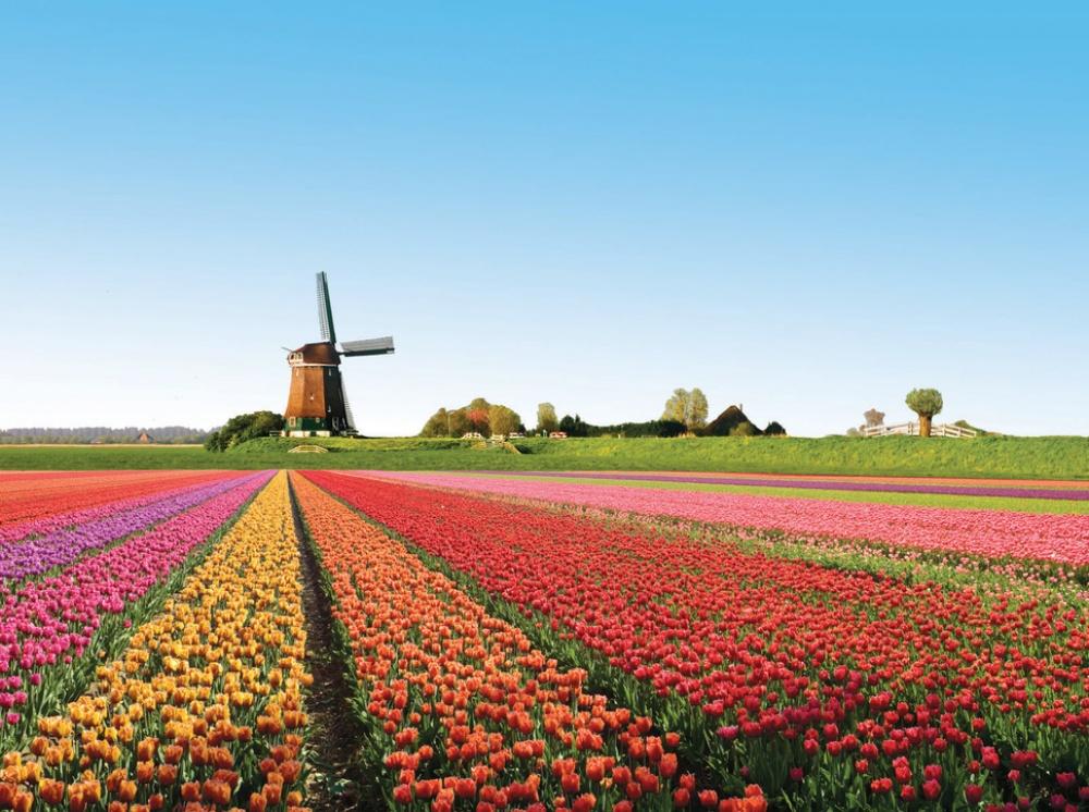 Что посадить на участке после того, как тюльпаны отцвели   cельхозпортал