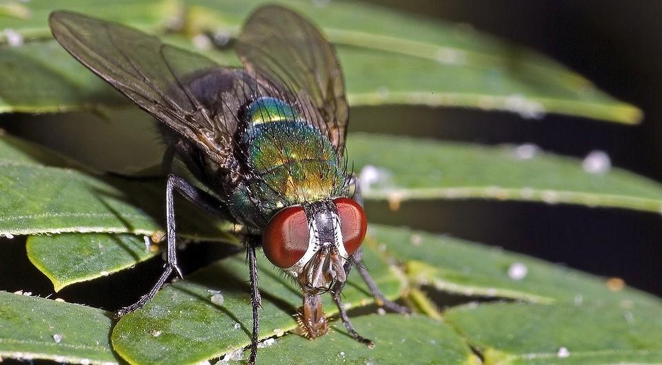 Избавиться от мух в доме: как быстро уничтожить без химии, народные и химические средства