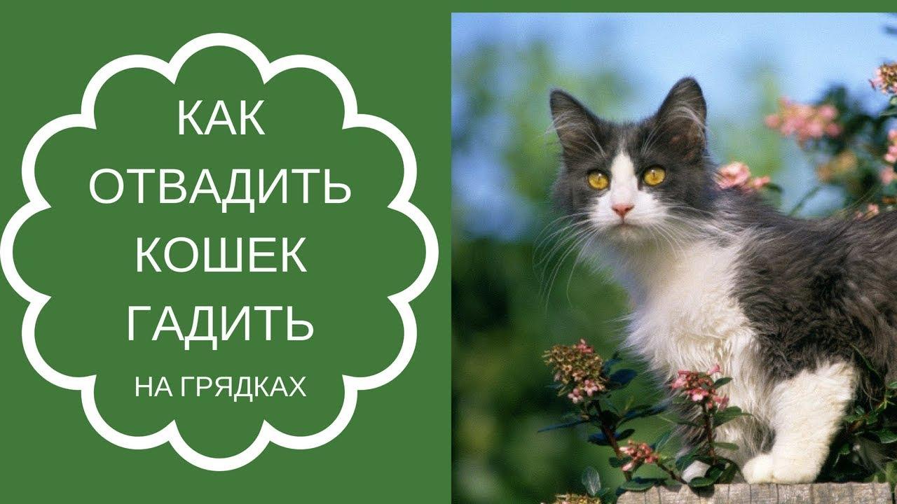 Как отвадить кошек от участка: отпугиватель своими руками и другие способы