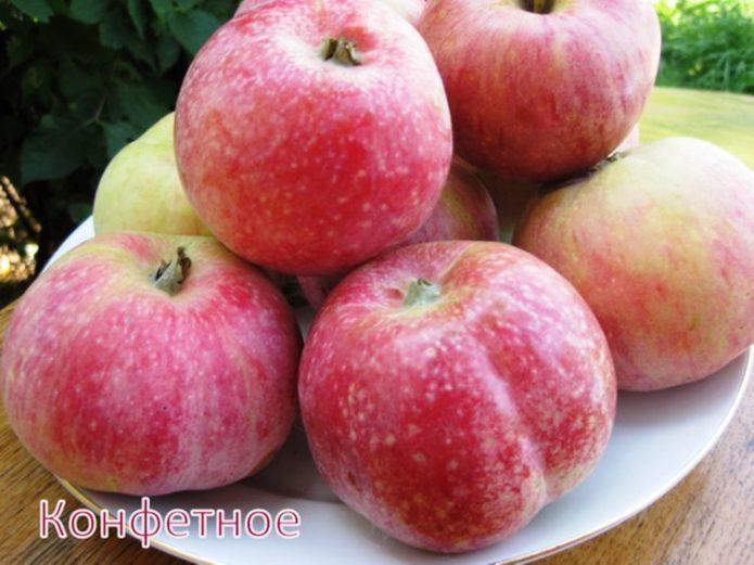 Выбор зимних поздних сортов яблонь с длительным сроком хранения плодов