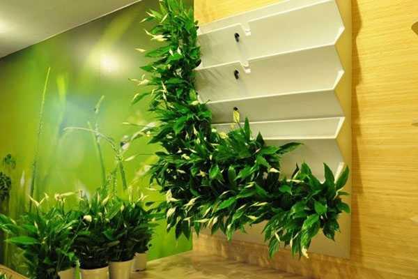 Вертикальное озеленение: топ-150 фото лучших решений. пошаговая инструкция от садовника