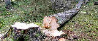 Деревья, лес на участке сельхозназначения – можно ли вырубать, и как урегулировать вопрос по закону