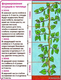 Советы садоводам и огородникам / асиенда.ру
