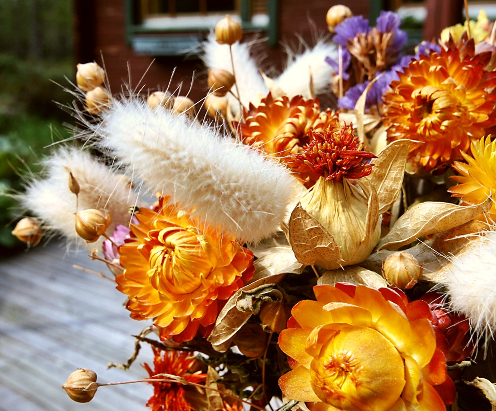сухоцветы для флористики названия