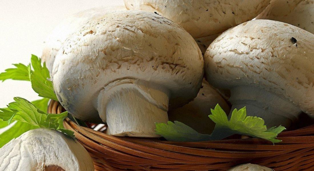 как вырастить грибы в домашних условиях шампиньоны