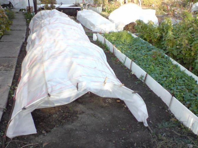 Все о применении железного купороса в садоводстве