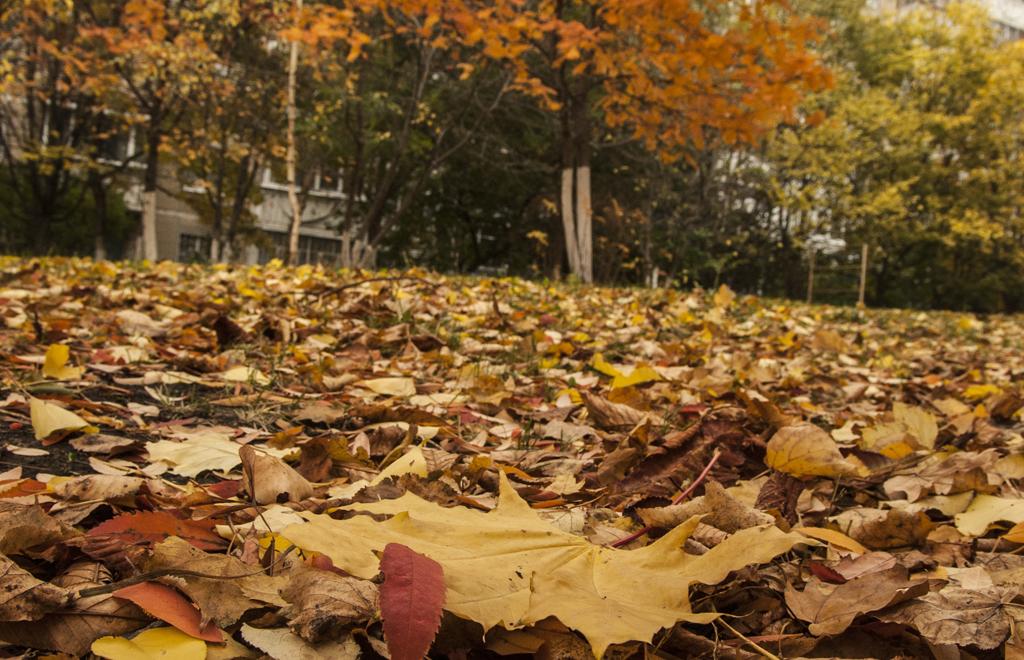 Использование опавшей листвы на дачном участке