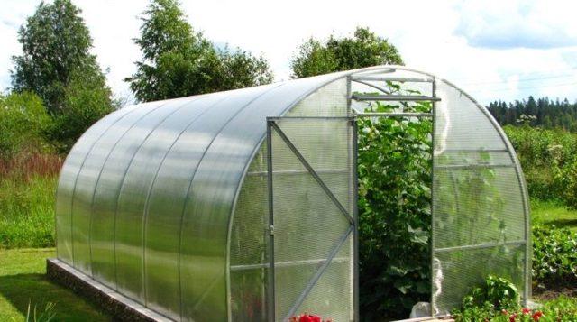 Как расположить растения в теплице