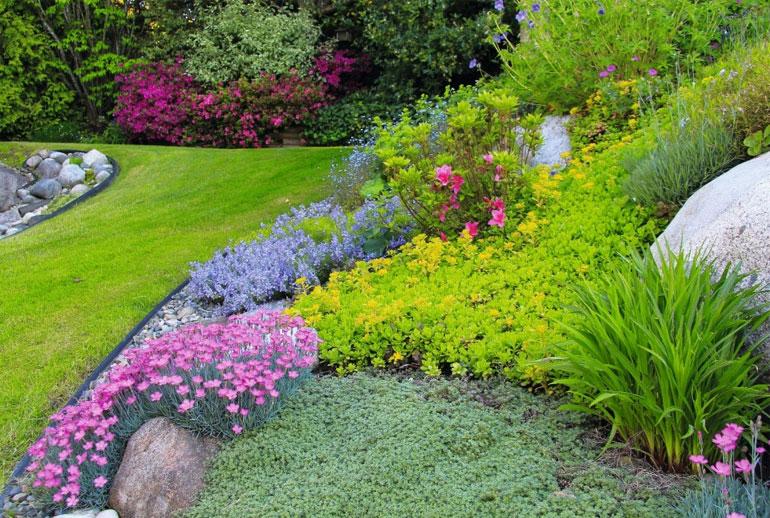 почвопокровные многолетники цветущие