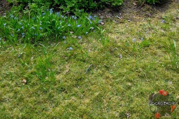 Чем полезны поганки в огороде?