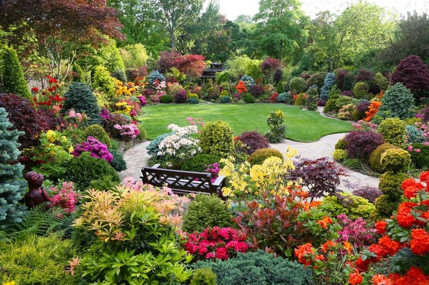 Декоративные кустарники для сада и дачи: цветущие, морозоустойчивые и другие с фото и названиями